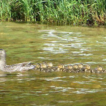 A Dozen Ducklings by ThomasMurphy