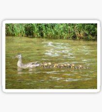 A Dozen Ducklings Sticker