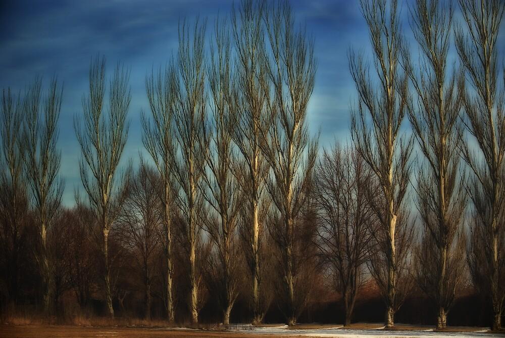 Barren by Idil