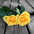 yellow roses by sashawood
