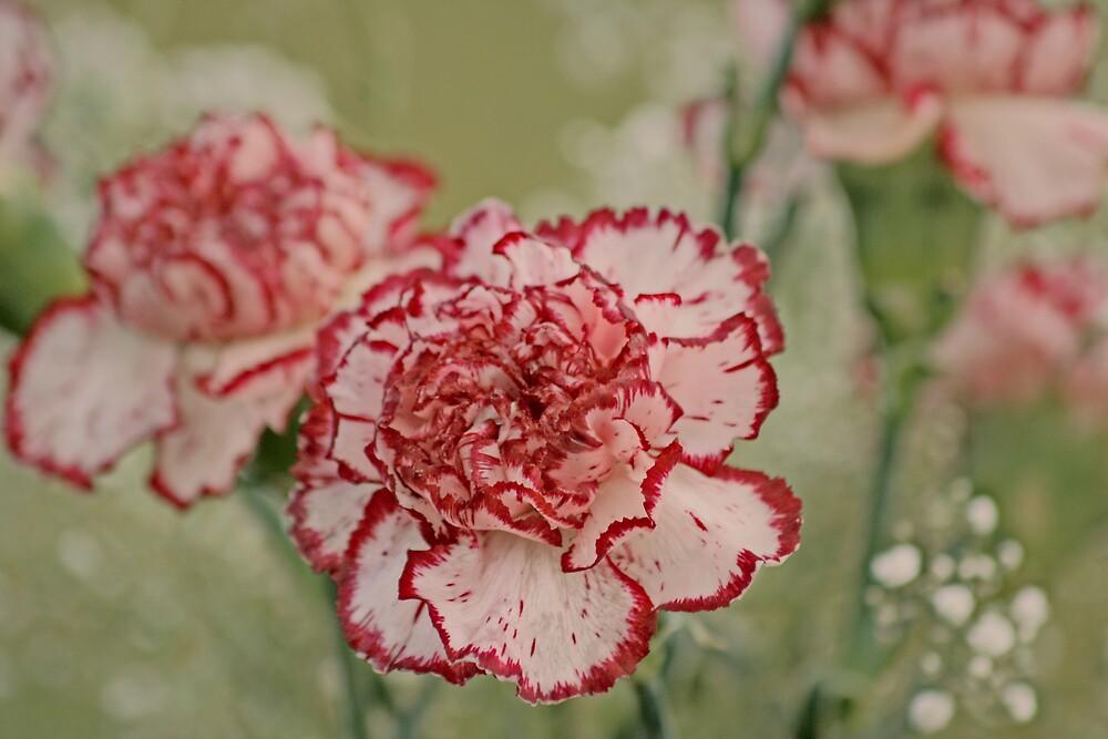 Vintage Carnations by KarenMcWhirter
