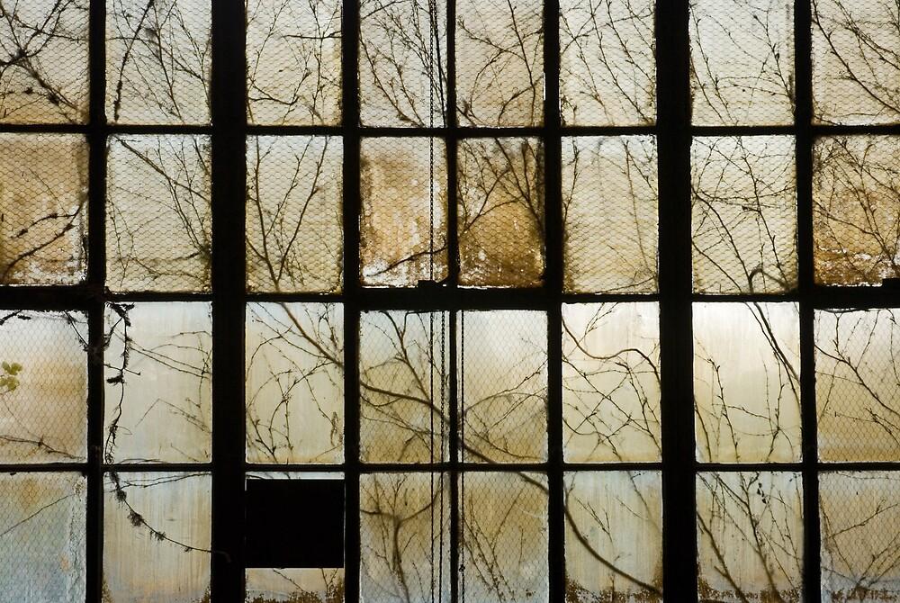 window by rob dobi