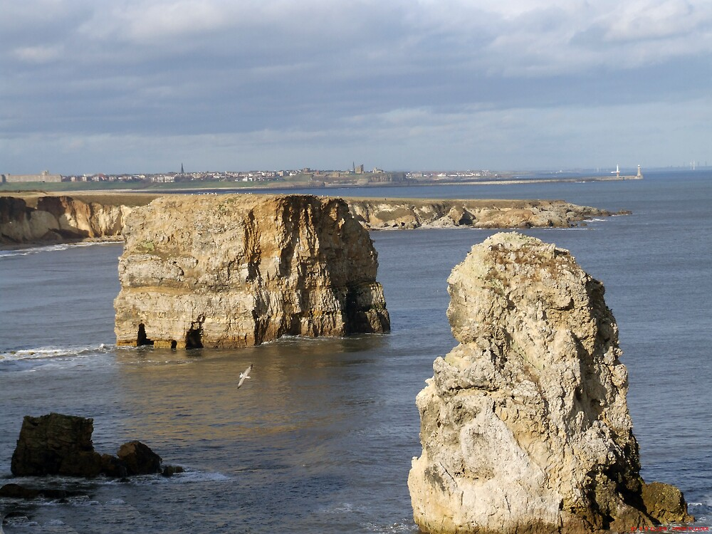 marsden rock south shields by David s Ellens