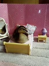 ducks bedroom by darren  shaw