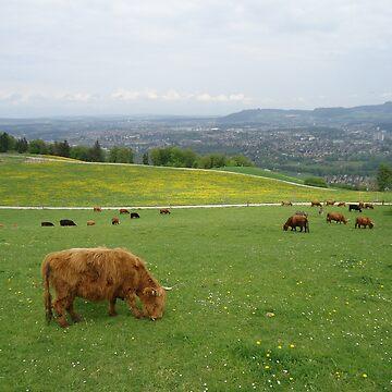 nature, animal, grass, hillside by fladelita