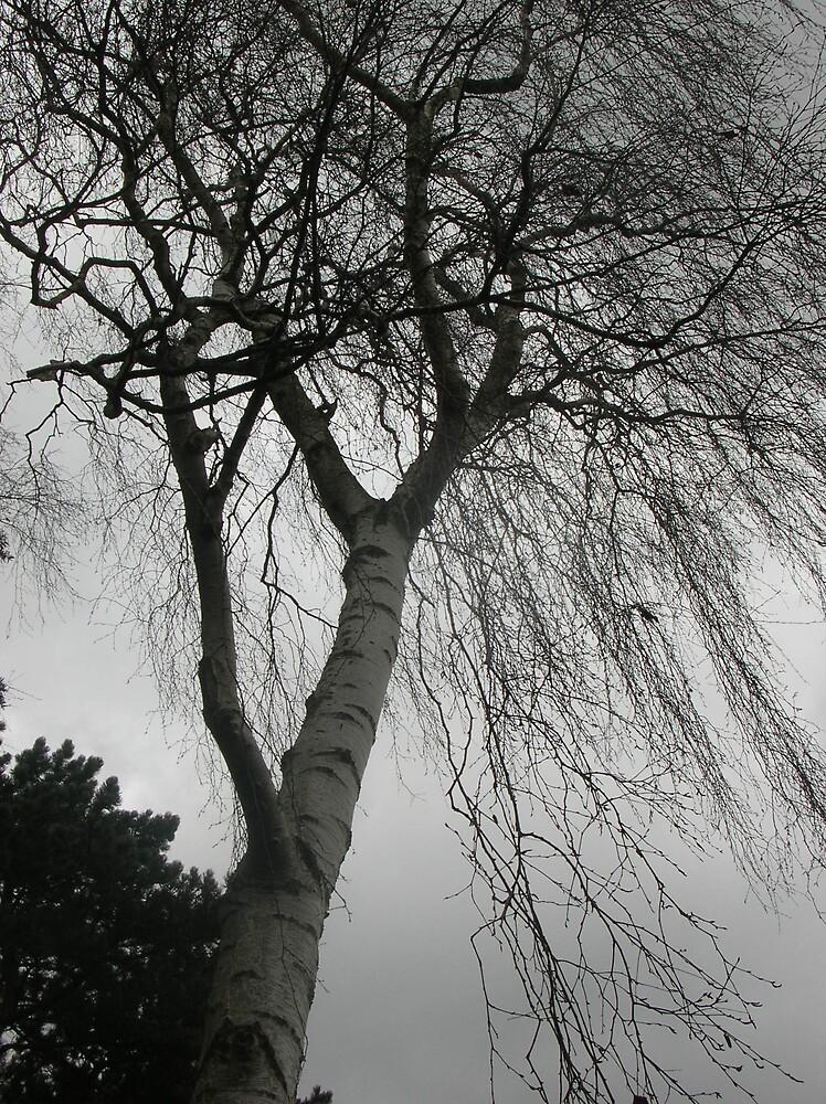 windswept by yorkyanne