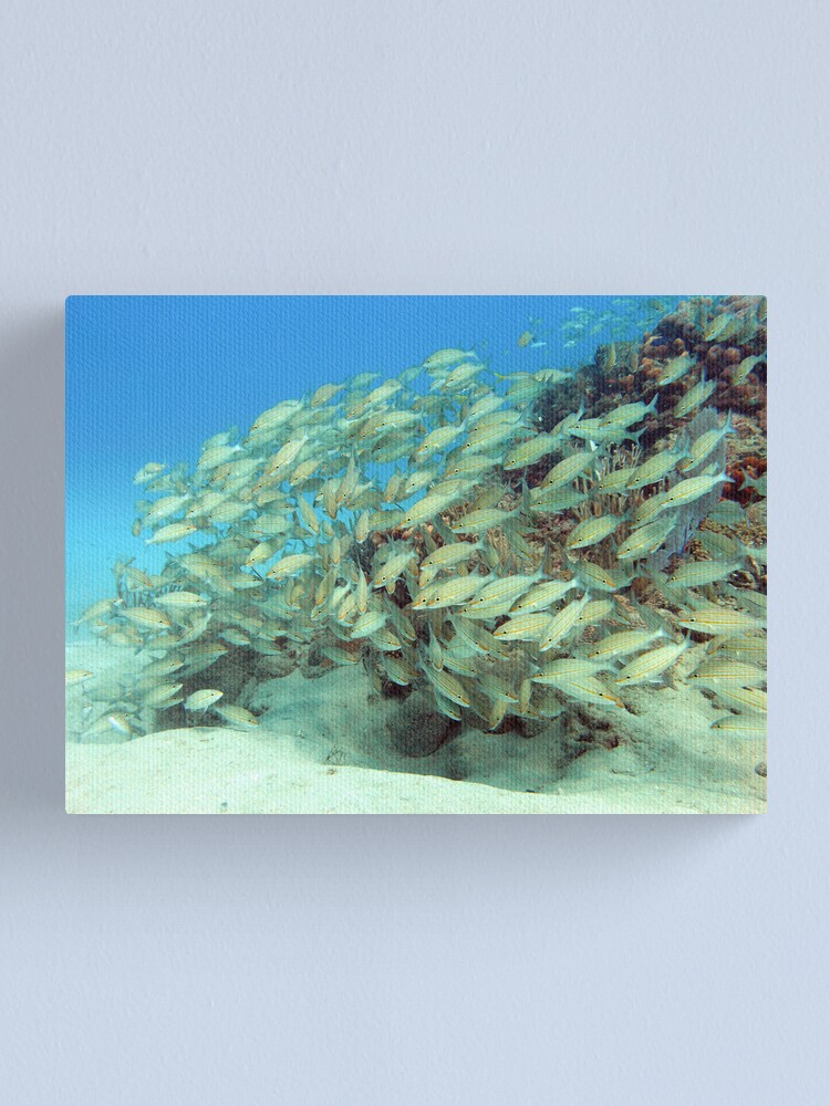 Alternate view of fish Canvas Print