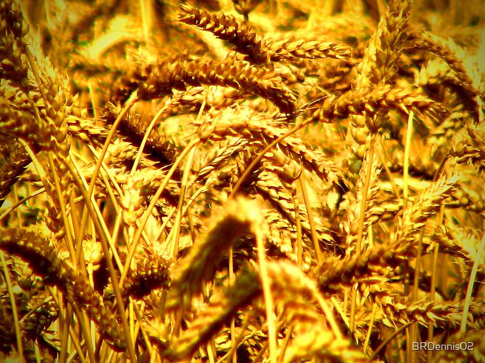Barley by BRDennis02