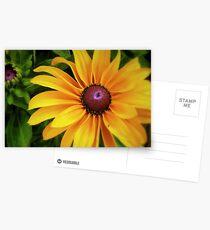 A Ray Of Sunshine Postcards