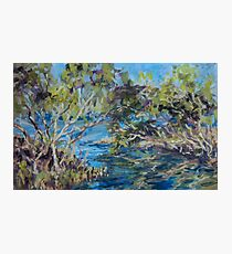 Laurieton mangroves - plein air Photographic Print