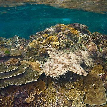 Tasselled Wobbegong - Camouflage on the Reef by gardenofbeeden