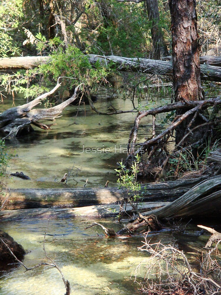 Pearl Creek by Jessie Harris