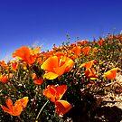 Lost In Orange by ArieDee
