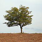 Lone Tree in Dry Land by Yannik Hay