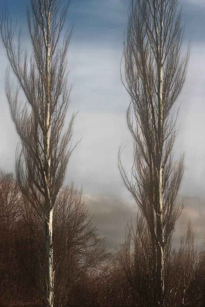 Bare Trees by Idil