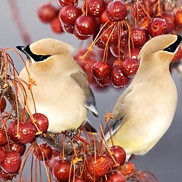 Feathers and Cherries by Photograph2u