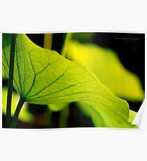 Lotus Leaf Poster