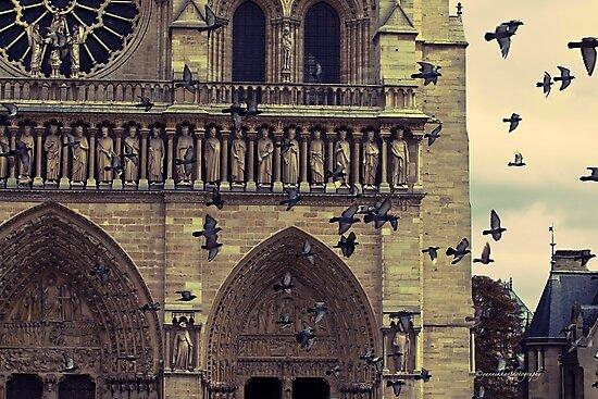 Notre-Dame de Paris Cathedral by Yannik Hay