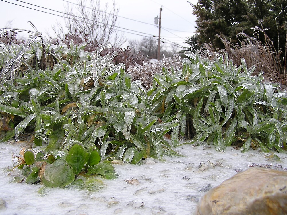 Icy Morning by Christine Frydenborg Dargon