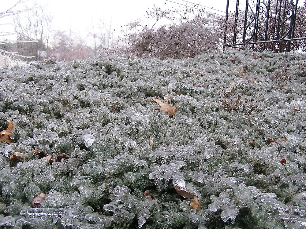 Icy Morning 4 by Christine Frydenborg Dargon