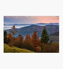 forest over foggy valley in autumn mountains Photographic Print