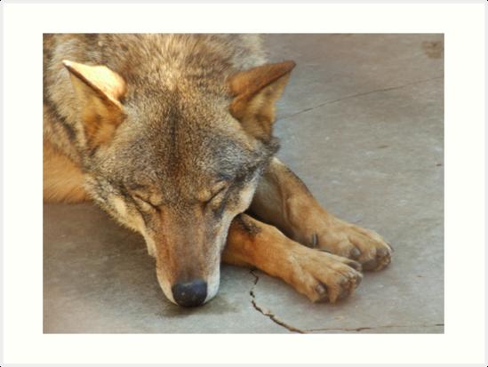 Wolf 1 by Nenad Kostadinovic