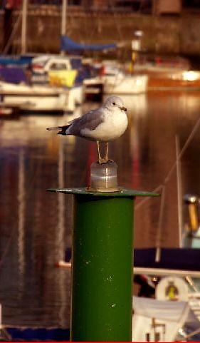 pole position ... by SNAPPYDAVE
