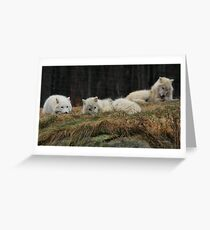 Peaceful Wolf Pack Greeting Card