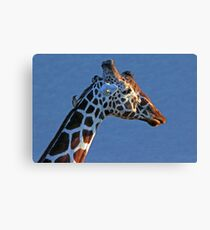 Samburu Giraffe Canvas Print