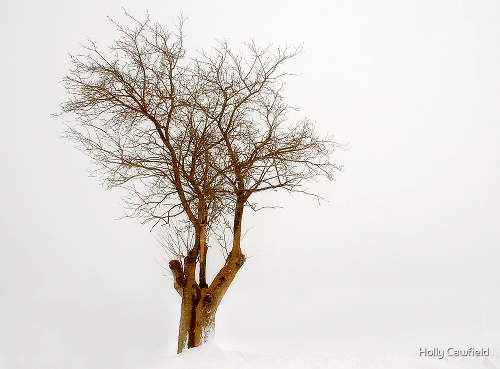 Winter Tree by Holly Cawfield