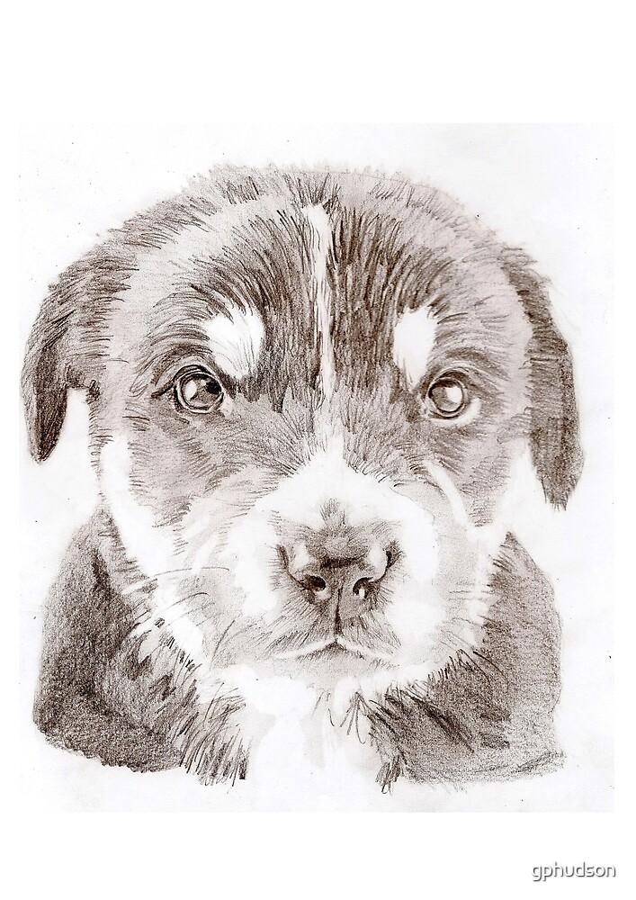 Puppy by gphudson