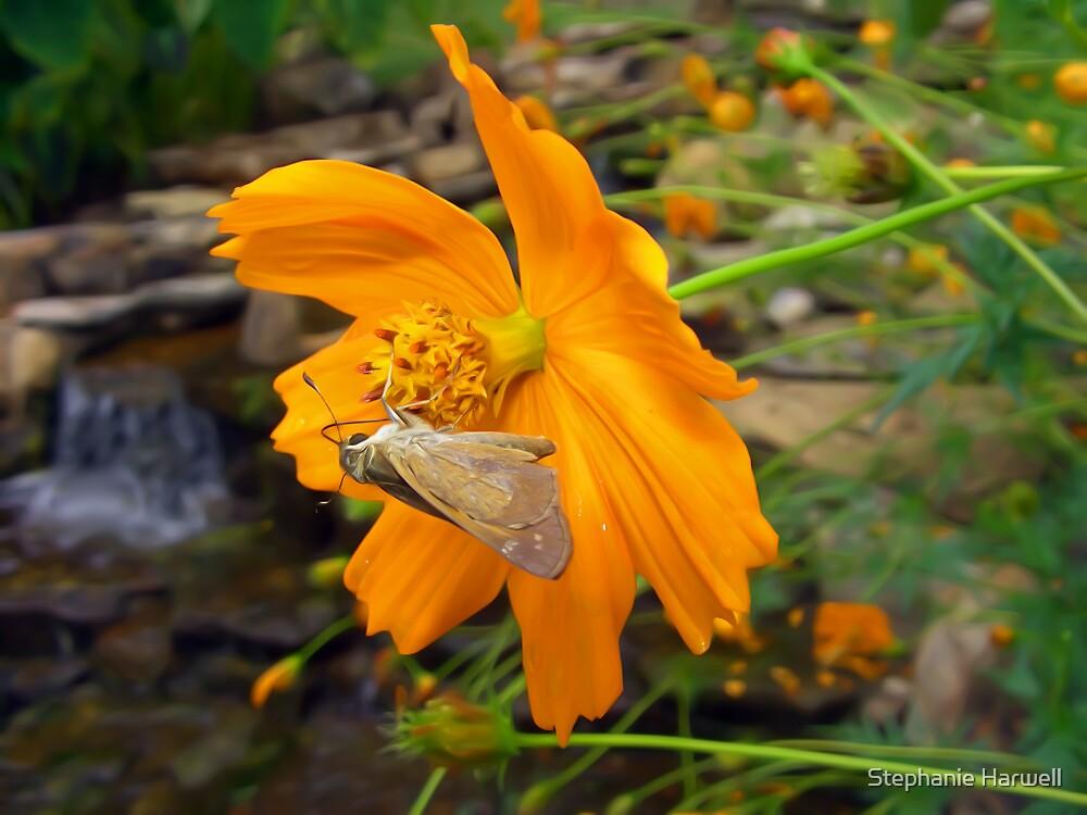 Flutterflies by Stephanie Harwell