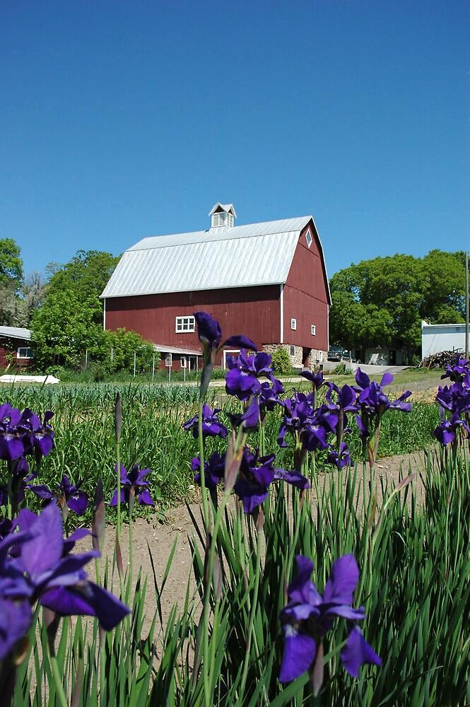 Grandpa's barn by Csquared