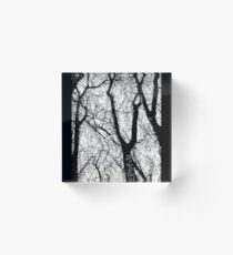 Bare Naked Trees in Winter Acrylic Block