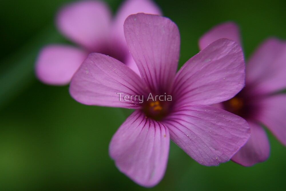 purple by Terry Arcia