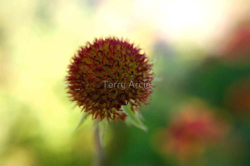 Beginning of Life by Terry Arcia