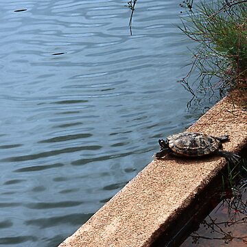 Sunbathing Turtles by skinburn