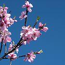 Spring Blossom by Lois Patrick