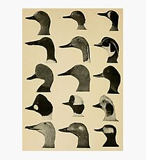 Vintage Duck Heads Photographic Print