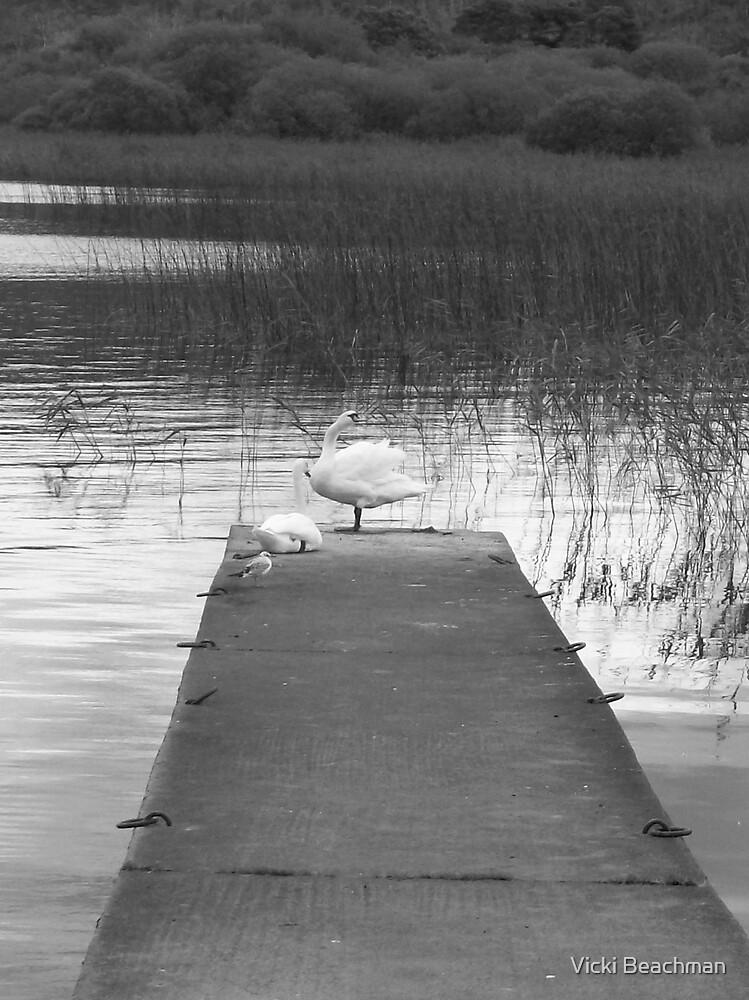 Swans by Vicki Beachman