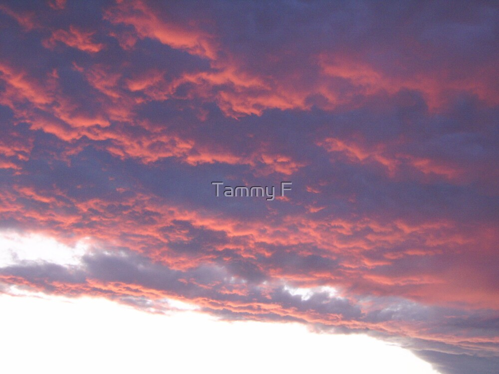 Pink Clouds by Tammy F