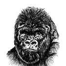 Gorilla 2 Skizze von sandyeates