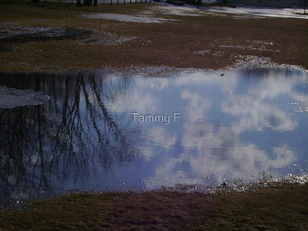 Mud Puddle Reflection by Tammy F