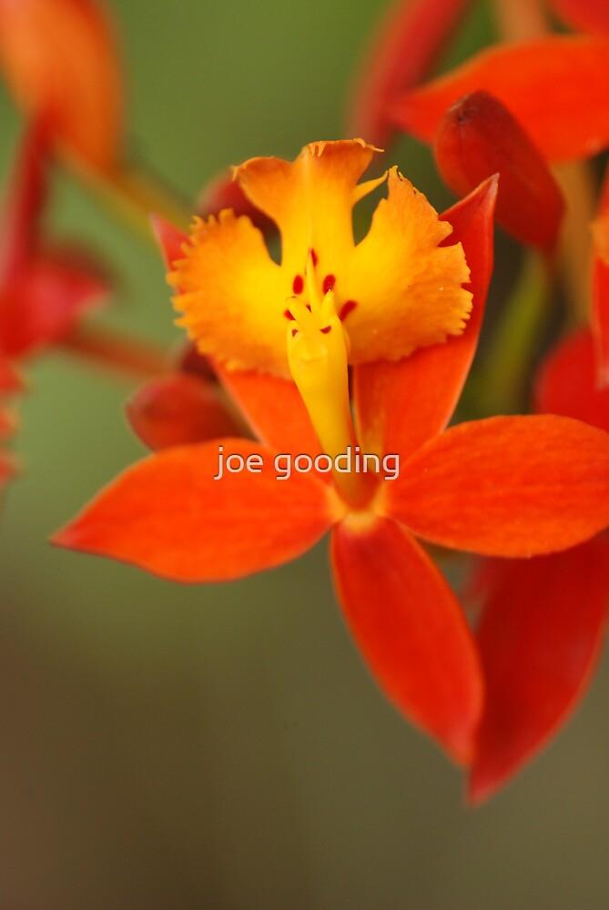 jungle flower V by joe gooding