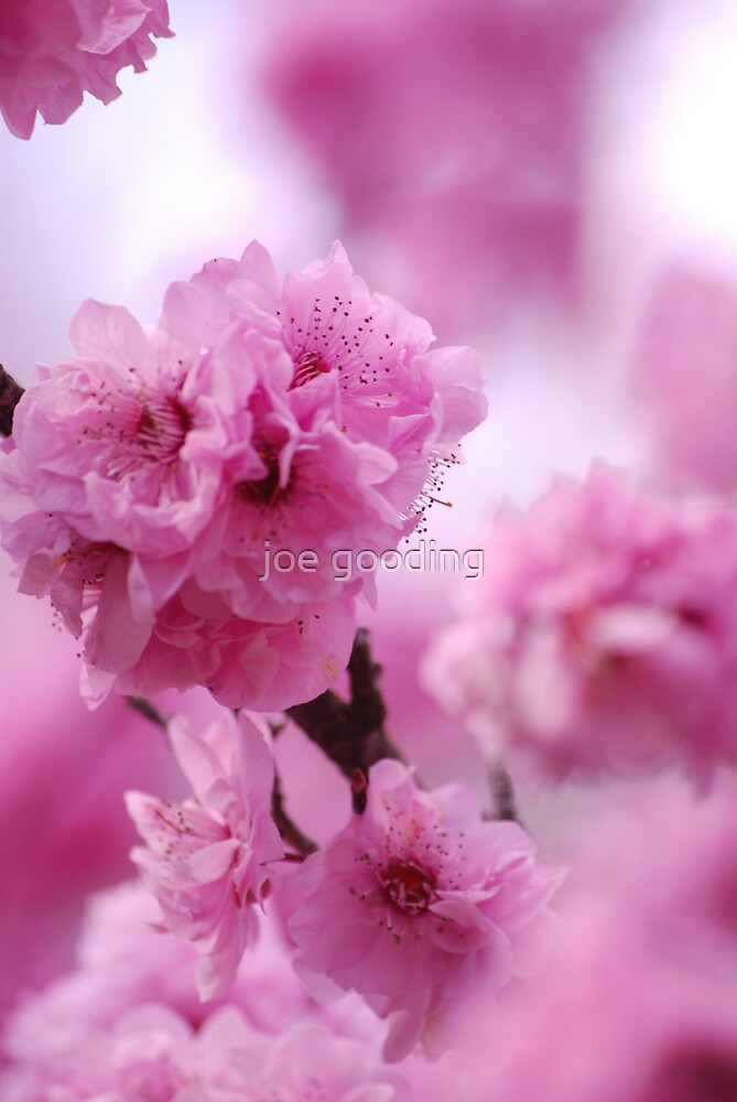 spring flower by joe gooding