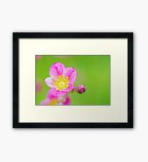 Macro pink flawer on green background Framed Print