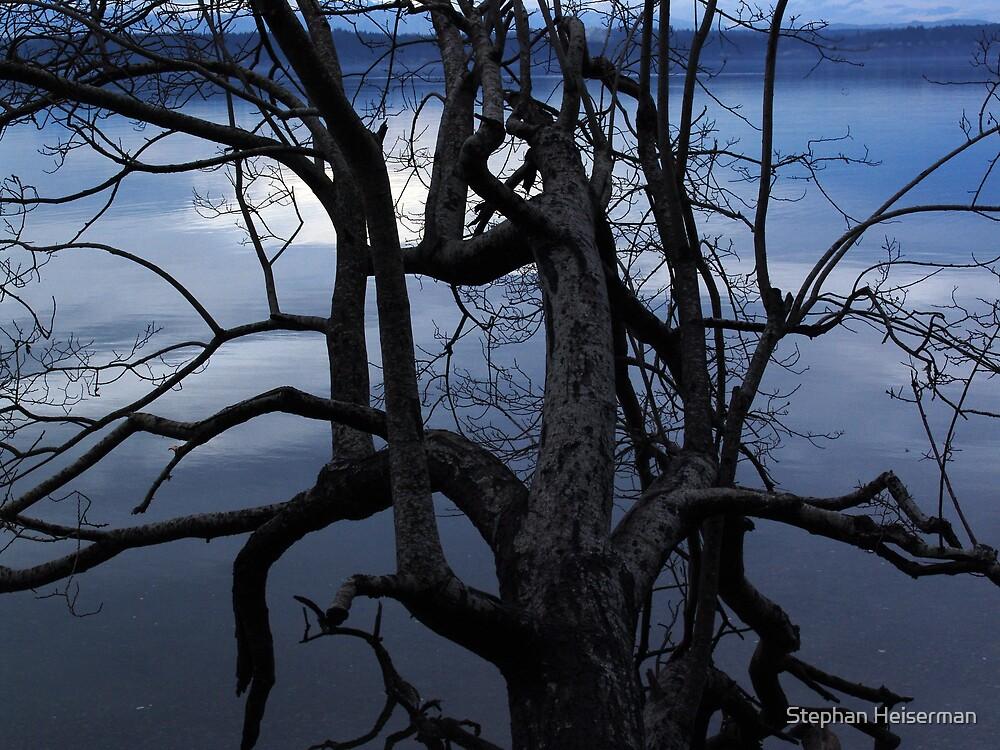 Tangled Tree by Stephan Heiserman