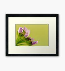 little flower buds Framed Print