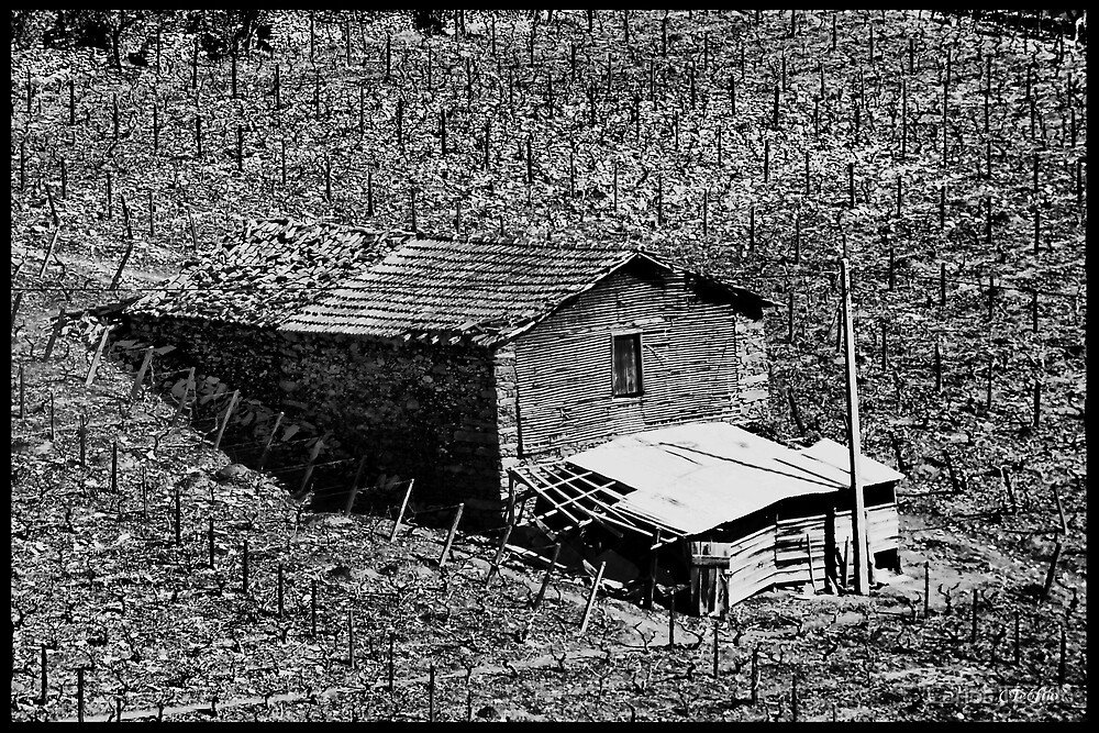 RURAL by Carlos Teófilo