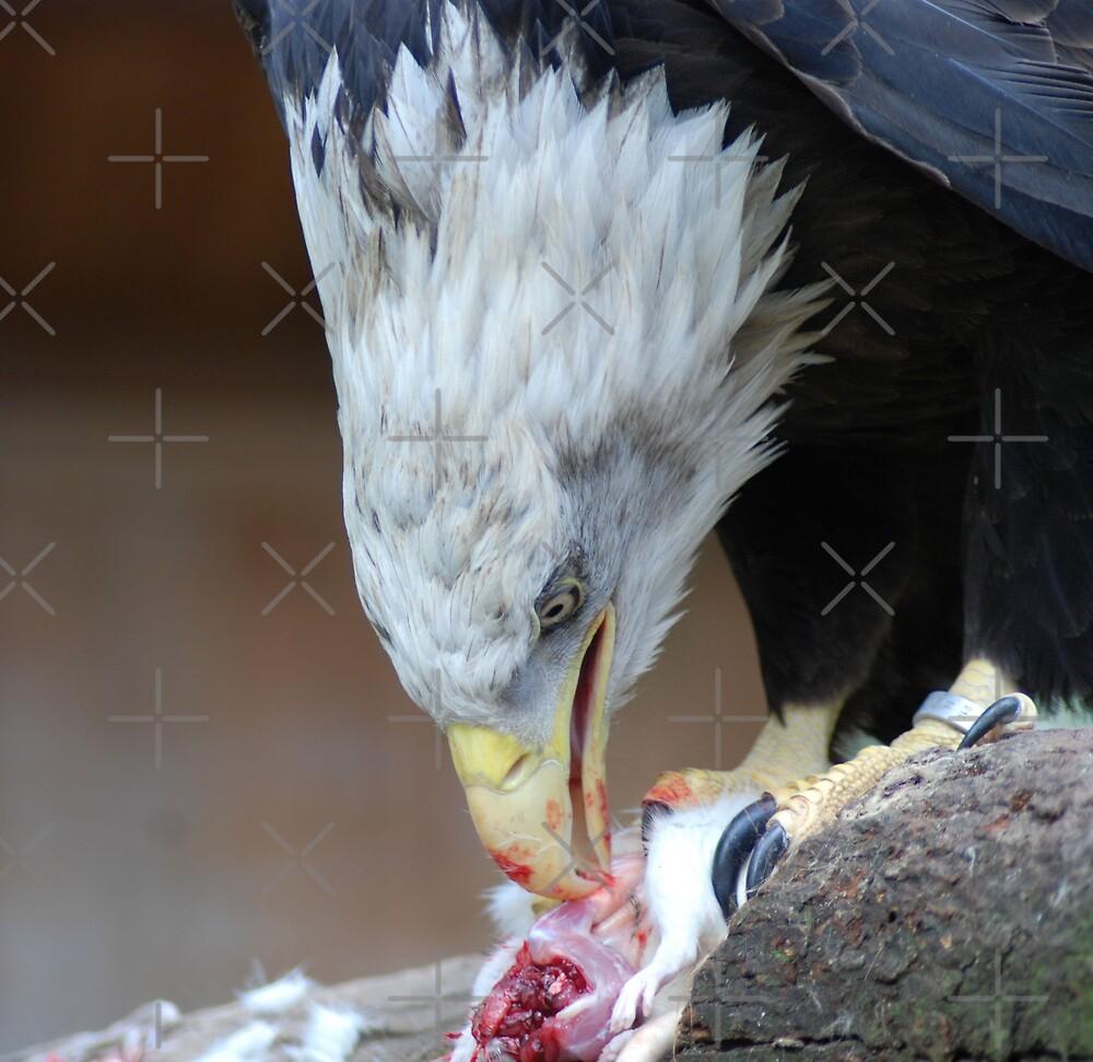 Bloody Beak by nitelite